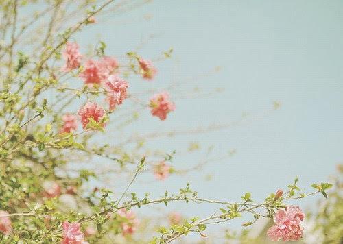 floral tumblr themes - Ataum berglauf-verband com