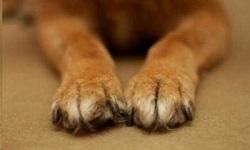 Πάτρα: Θανάτωσαν με φόλες 20 σκυλιά στην περιοχή του Ρίου