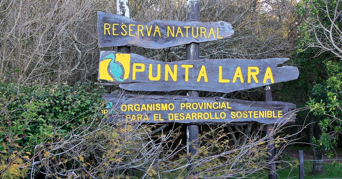 Aves Bonaerenses: Reserva Natural Punta Lara