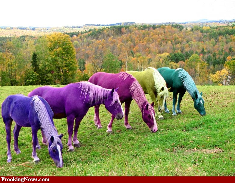 Wonderful Teacup Horse Pictures - Best Image Engine - maxledpro.com