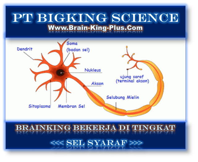 Brainking Plus > 08123 01 8900