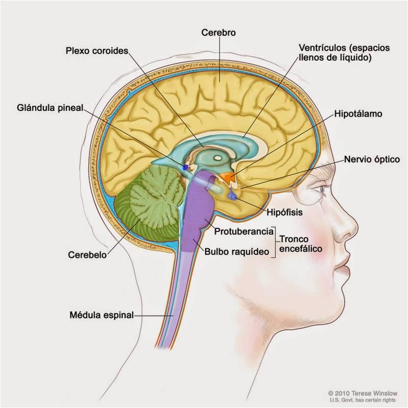 Wanadi22. Reflexiones Psico-antropológicas: Neurociencias - La ...