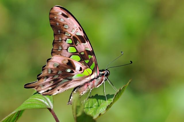 الفراشات المخلوقات الخارقة