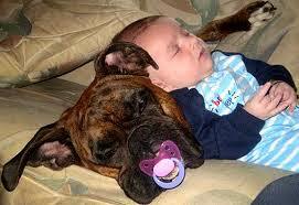 Hijo durmiendo con el Perro