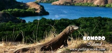 Gambar wisata dan keindahan alam Pulau Komodo di NTT Indonesia