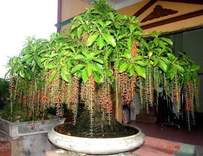 Những cây trồng trong nhà hợp phong thủy và hút tài lộc