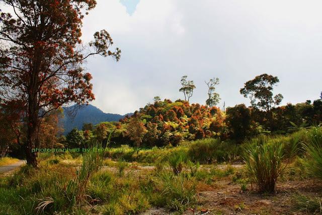 Vegetasi yang berwarna-warni sekitar kawah Talaga Bodas.