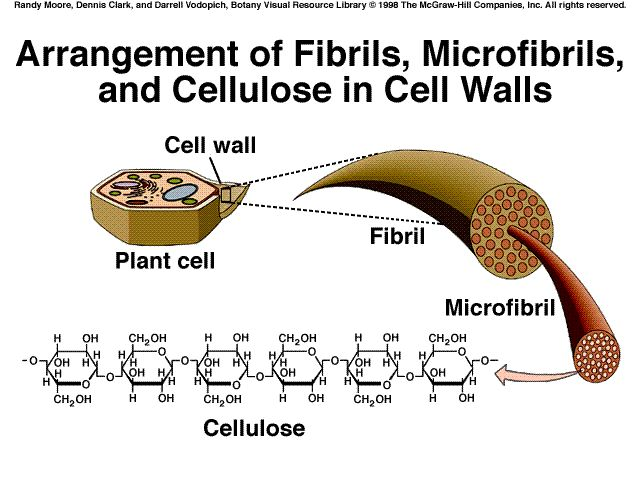 Historical Development Of Cellulose Material