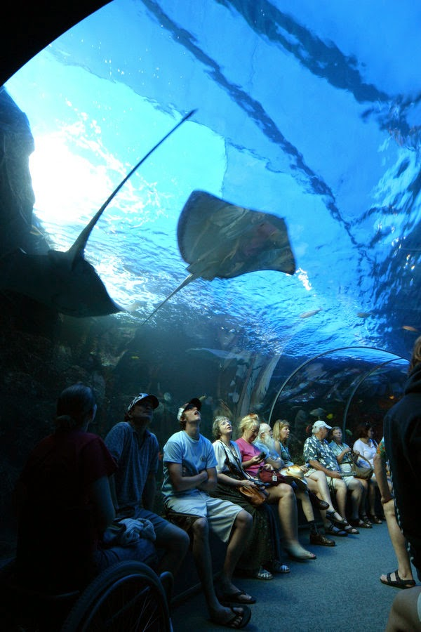 Sizzling Tourist Hotspots in Hawaii | Maui Ocean Center - The Hawaiian Aquarium in Wailuku