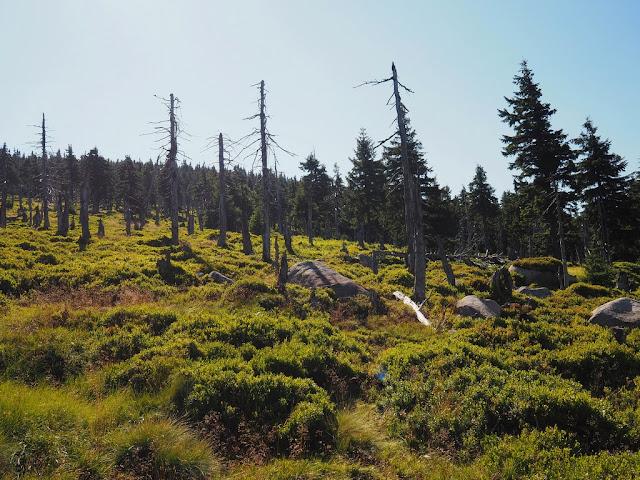 Špindlerova bouda, Sněžka, příroda, Krkonoše, národní park, lesy, láska