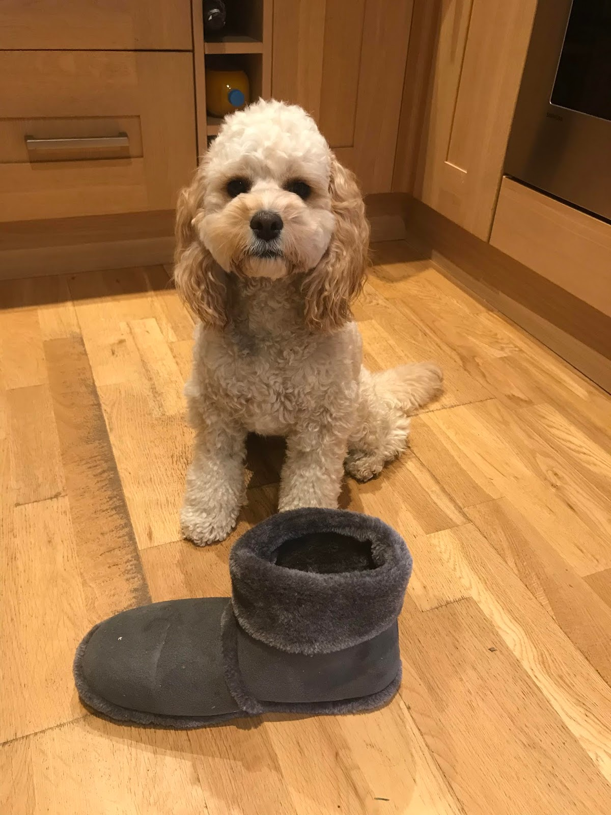 A cute dog guards a slipper. Part of an article by Is This Mutton? on slippers, the ultimate taboo subject!