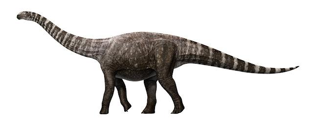 A high-heeled dinosaur?
