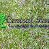 Jual Rumput Taman | +62 822-4494-4492 | TUKANG TAMAN ONLINE