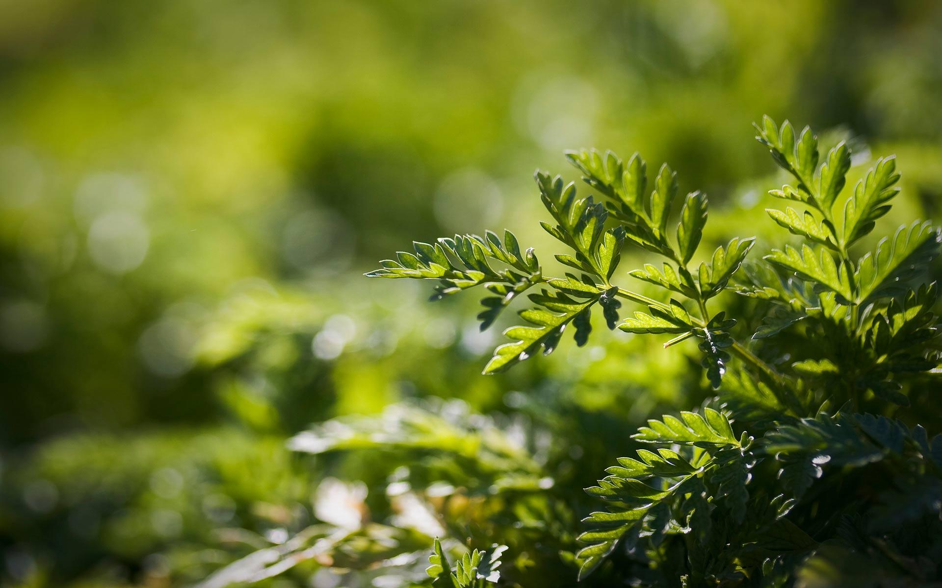 Papel De Parede Grátis Natureza Verde