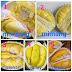 Beraneka Macam Buah Durian Terpopuler di Indonesia