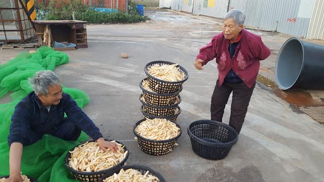 【菜脯埕】老闆嬤(右),正在指導醃製