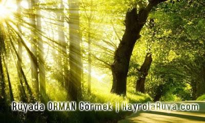 orman-ormanlik-koru-ruyada-gormek-nedir-ne-anlama-gelir-dini-ruya-tabiri-tabirleri-kitabi-hayrolaruya.com