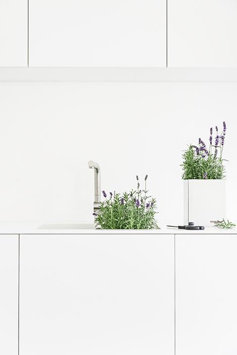 Lavendel für die Küche, mein Kräuterbeet.