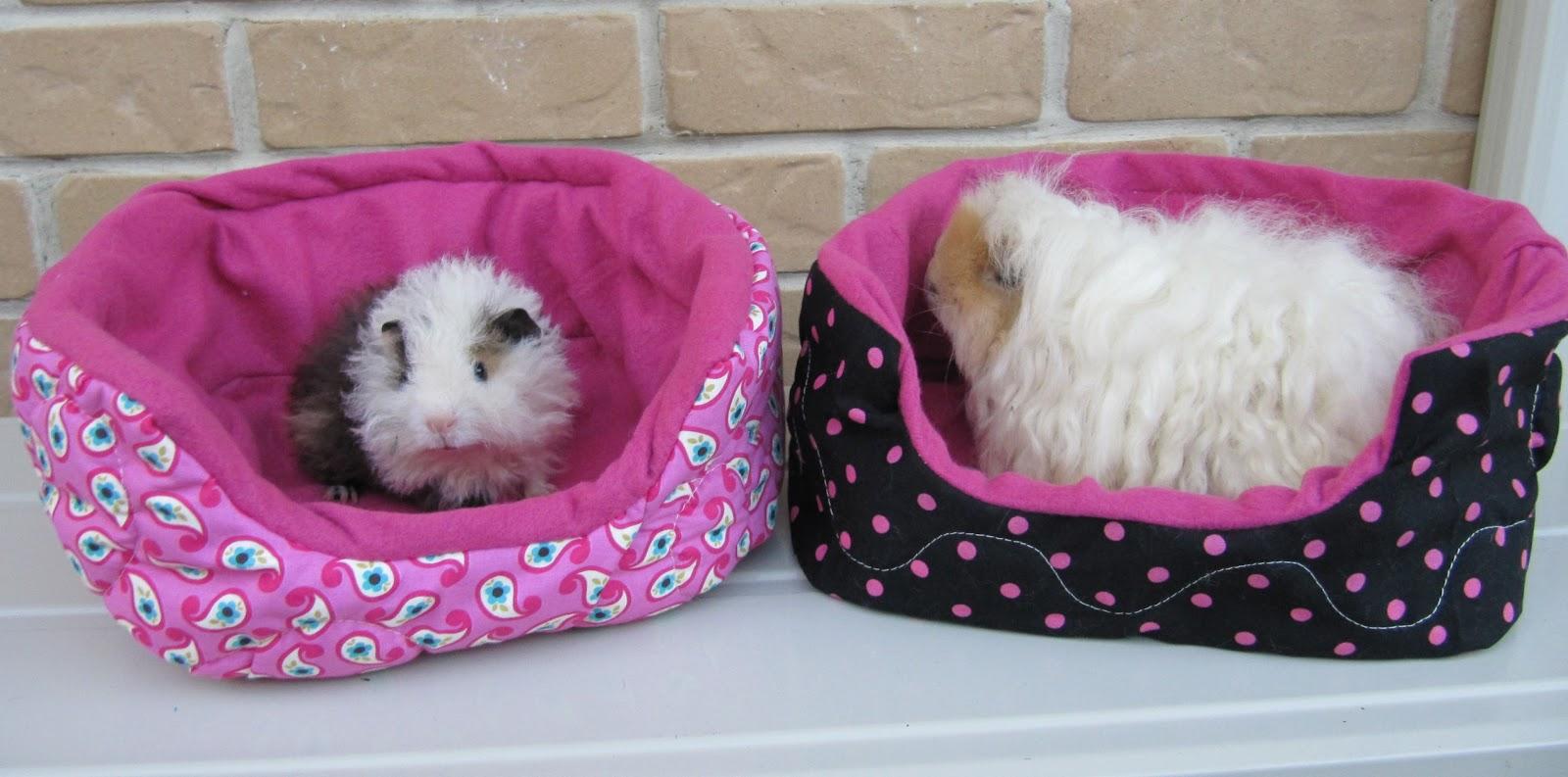 Guinea Pig Pet Store