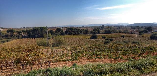 cava colet vinyes