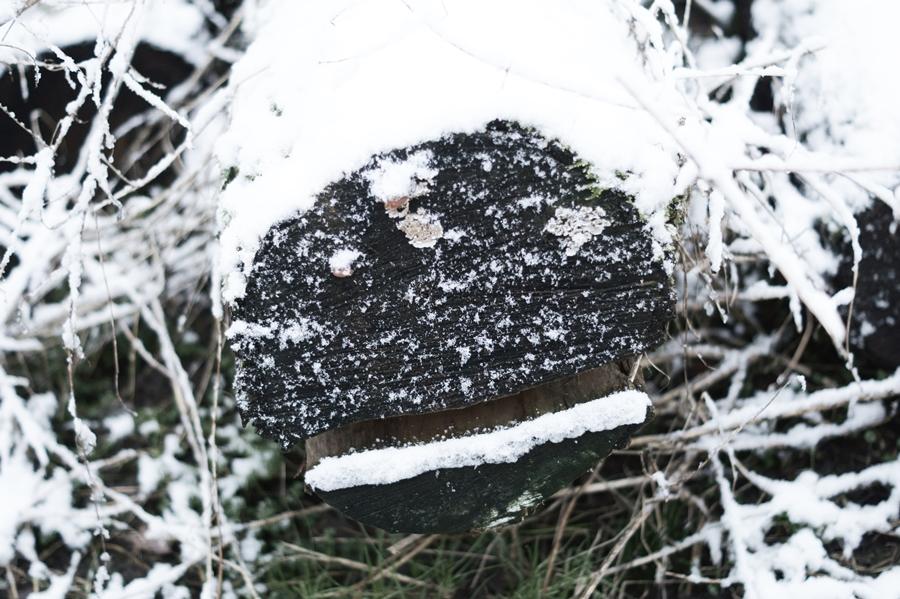 Blog + Fotografie by it's me! - Draussen - Frau Frieda sucht Schnee, verschneiter Baumstamm mit Gesicht