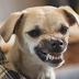 tu perro siempre lo supo, La ciencia confirma los perros pueden identificar a una mala persona.