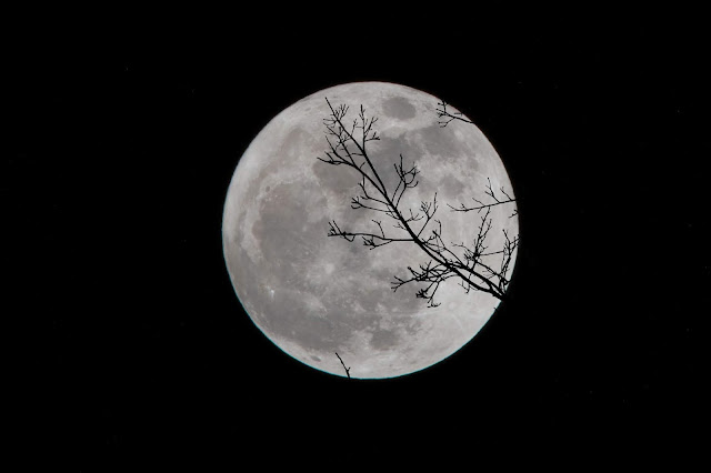 Full moon with the outline of a tree in its forefront