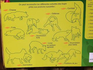 panneau explicatif des postures du loup