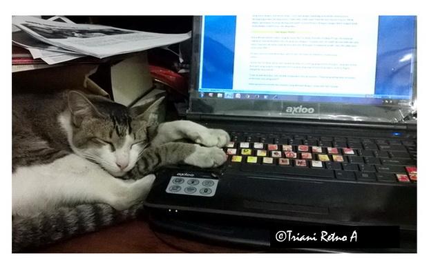 penulis produktif