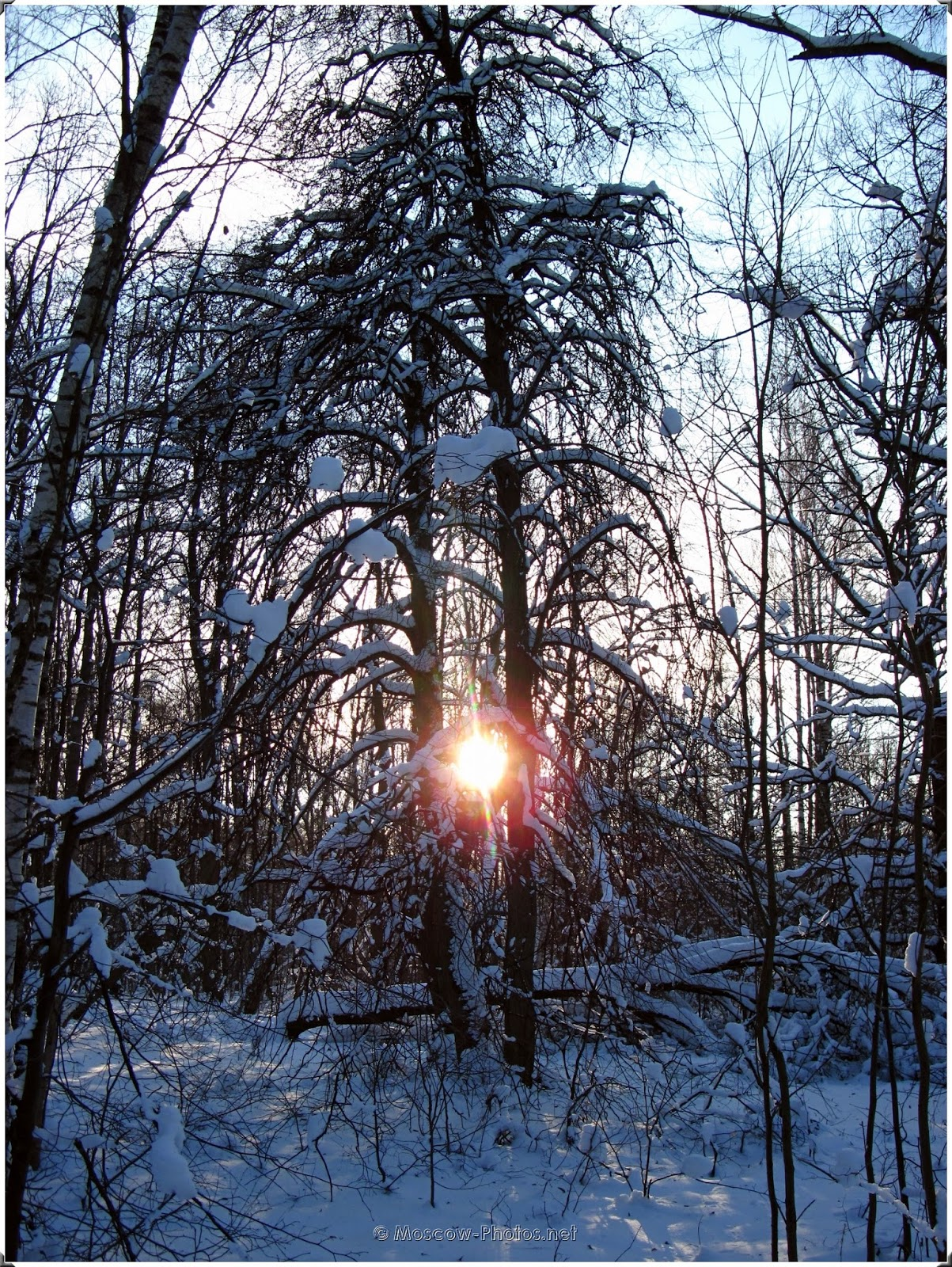 Winter In Moscow Forest
