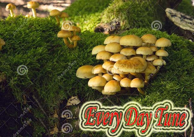 ৫ টি মাসরুম রেসিপি-5 mushroom recipes