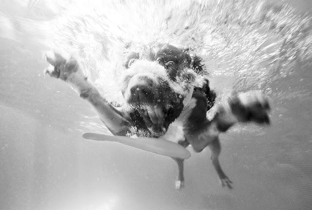 6 perguntas ao Fotojornalista Rodrigo Cabrita