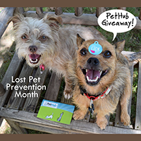 PetHub Lost Pet Prevention Month Giveaway