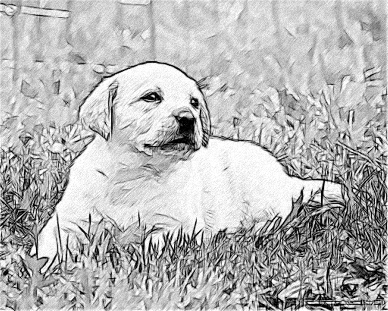 Line Drawing Pencil and Charcoal Art Galleries: Labrador ...