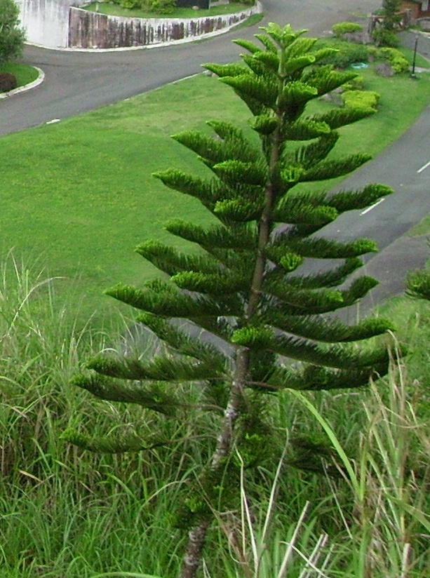 A life of a biologist: A misleading name of a Tree in the ...