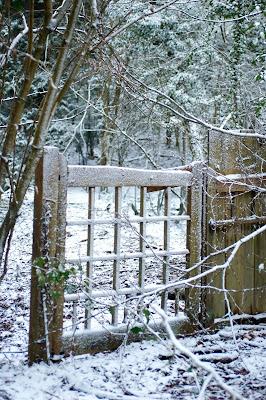snow path woods