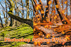 Photoshop autumn effect & Falling Leaves effect [ fast! ]