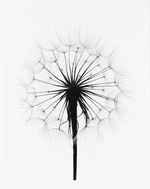 ec0c81b474940b Pins in black and white and beautiful quotes on my Pinterest-boards. Love  the pinsipration I get from scrolling on Pinterest or pinning new pins  wandering ...