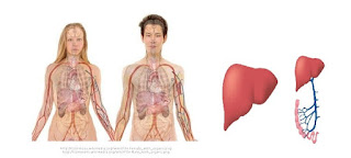 Liver Function - Top 13 Foods Cleanse The Liver