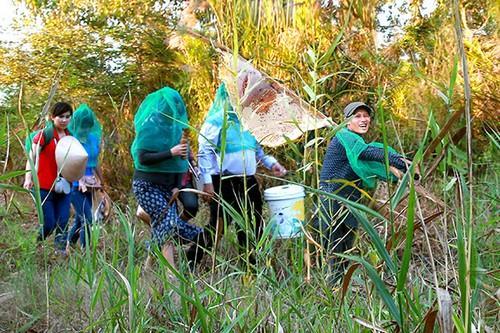Trải nghiệm vào rừng lấy mật cùng người dân Cà Mau