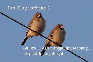meme gambar burung lucu 13