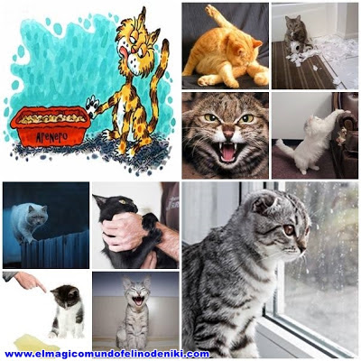 gatos-problemas-comportamiento-mas-comunes-causas-consejos
