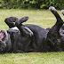 ΓΚΡΙΖΕΣ ΜΟΥΣΟΥΔΕΣ! Οργάνωση βοηθάει ηλικιωμένους σκύλους...