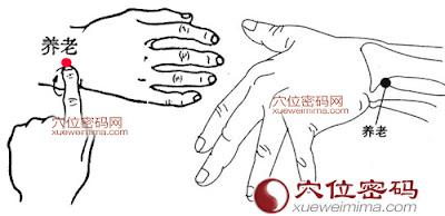 養老穴位 | 養老穴痛位置 - 穴道按摩經絡圖解 | Source:xueweitu.iiyun.com
