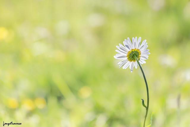 Flore des ALpes, Flore de France, flore, fleurs