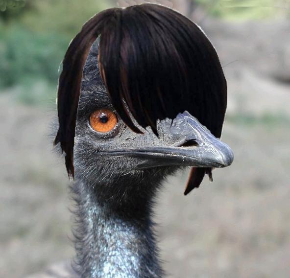 outback snack american emu
