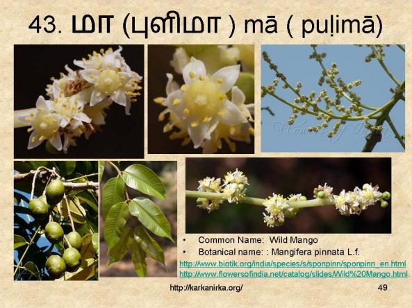 Silapathikaram story in english