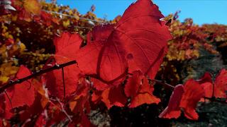 beaux-vin blog actualité vin drone viticulture