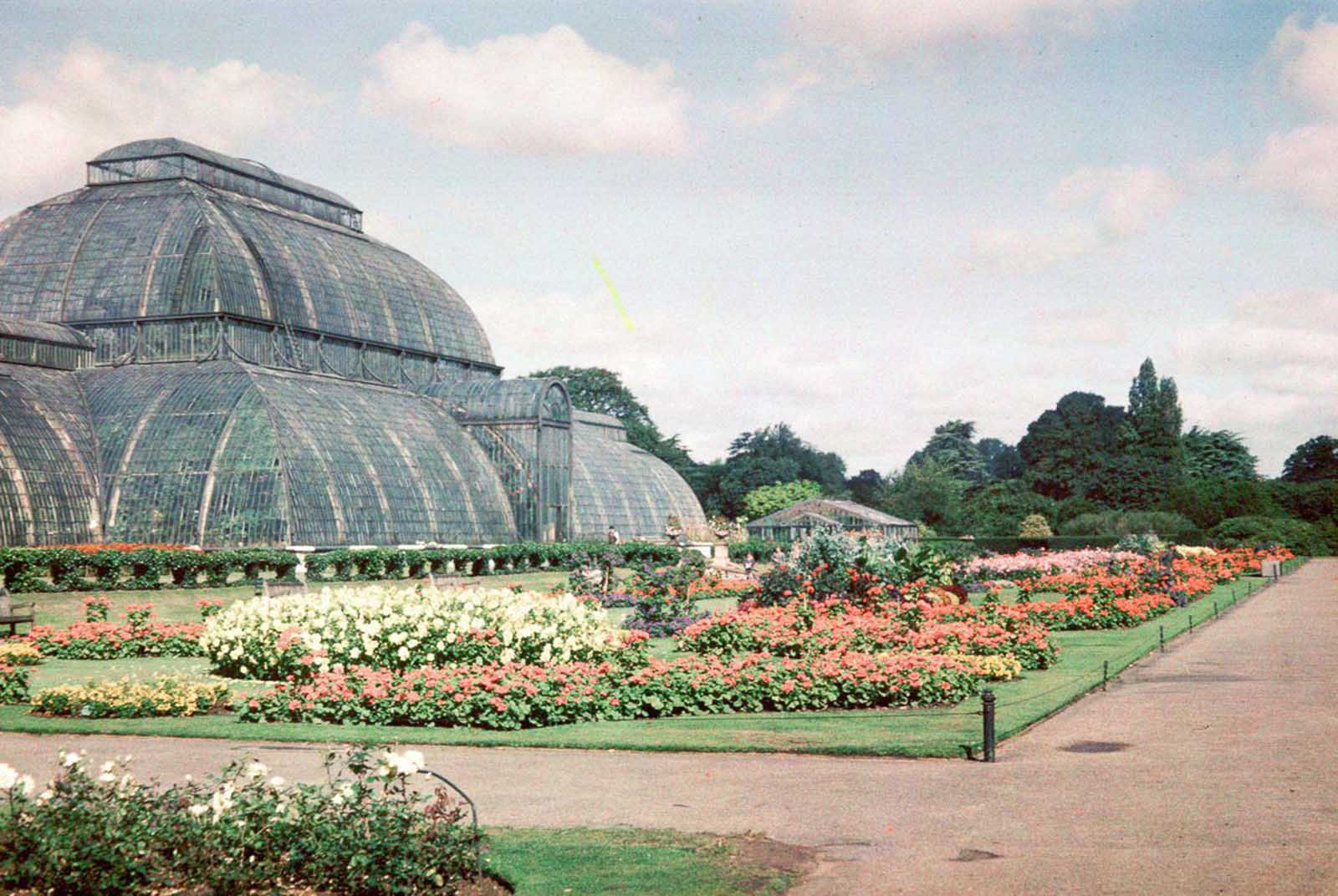 The Palm House in Kew Gardens. Sept. 3, 1945.