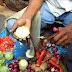 Κόφτης – ινδική πατέντα που τα κάνει όλα [Video]